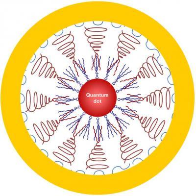 Универсальные наночастицы: диагностика и лечение в одной оболочке