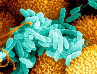 В борьбе с супербактериями поможет только плазмотрон
