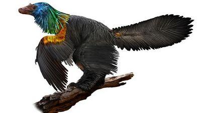 В китае нашли радужного динозавра
