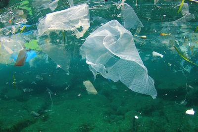 В водах арктики плавают сотни миллиардов частиц пластиковых отходов
