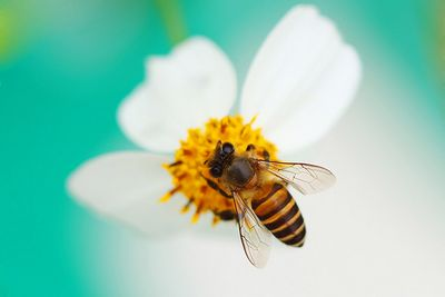 Вмедоносных пчелах обнаружили 57пестицидов