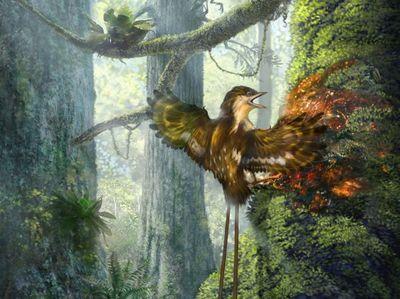 Вмьянме вянтаре обнаружили крылья древних птиц