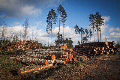 Внорвегии запретили вырубку леса
