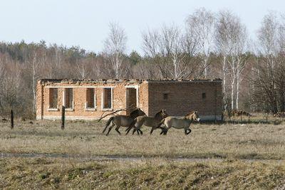 Взоне отчуждения чернобыльской аэс кипит жизнь